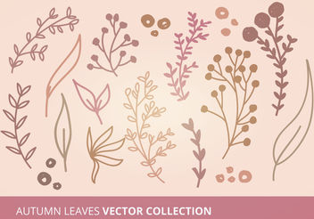Autumn Leaves Vector Collection - vector gratuit #199301