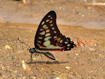 Black-blue butterfly - Kostenloses image #201551