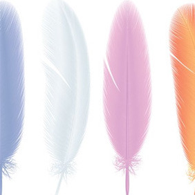 Colourful Feathers - Kostenloses vector #209701