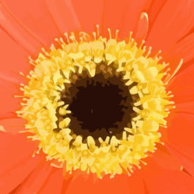Orange Flower - Free vector #223521