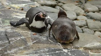 Penguins in The Zoo - image #225351 gratis