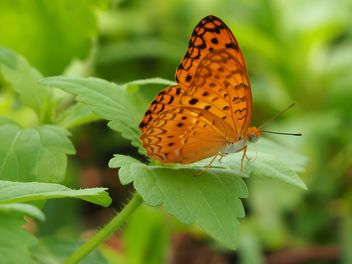 Butterfly close-up - image gratuit #225381