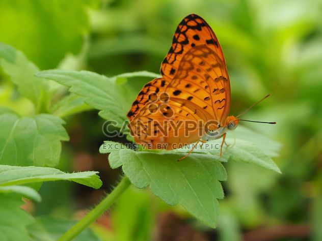 Butterfly close-up - Free image #225381