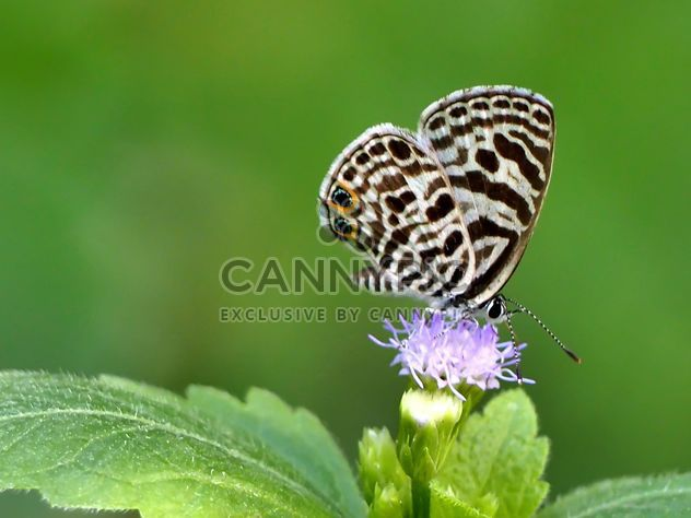 Butterfly close-up - Free image #225391