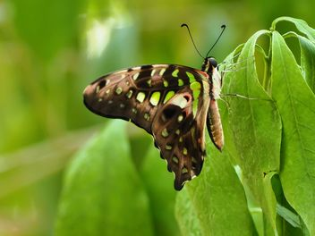Butterfly close-up - Free image #225401