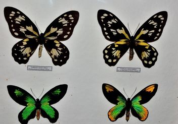 Collection of butterflies - Kostenloses image #229451