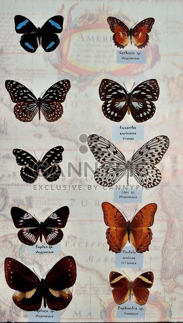 Collection of butterflies - Free image #229461
