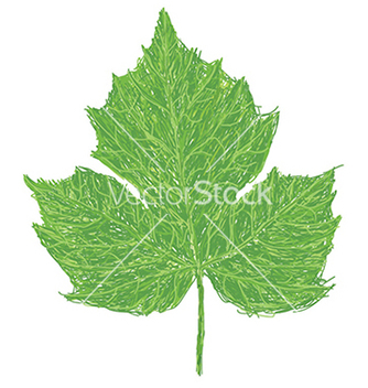 Free chaya leaf vector - Kostenloses vector #233351