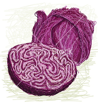 Free red cabbage cross section vector - vector gratuit #233791