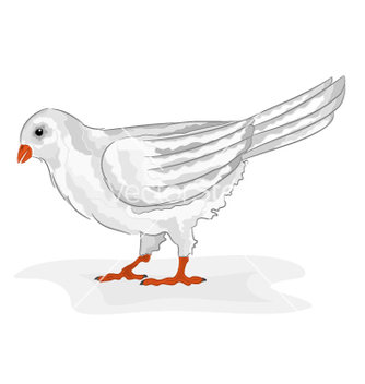 Free bird white pigeon white dove symbol peace vector - vector #235111 gratis