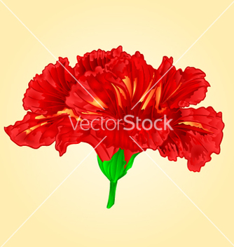 Free flower red hibiscus blossom simple tropics flower vector - Free vector #235271