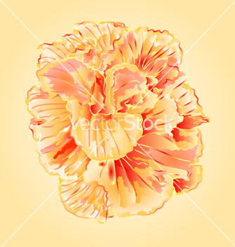 Free tropical flowers yellow hibiscus blossom simple vector - Free vector #235381