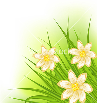 Free green grass with flowers spring background vector - Free vector #238231