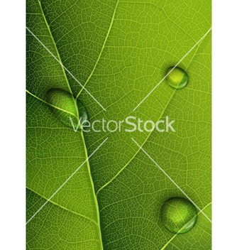 Free droplets on leaf vector - Free vector #266981