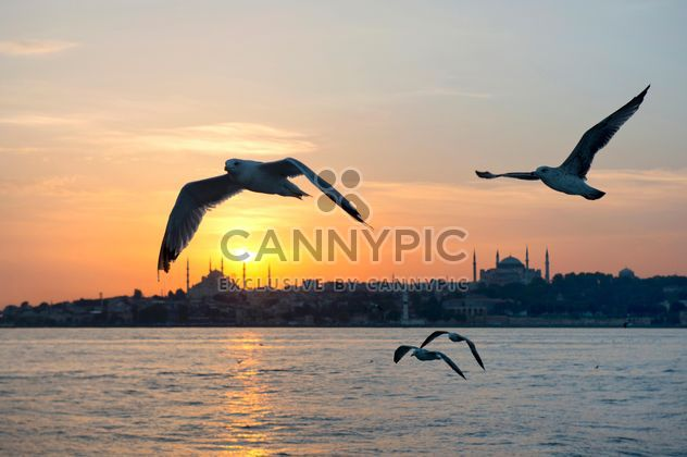 the flying seagulls at sunset - image #272521 gratis