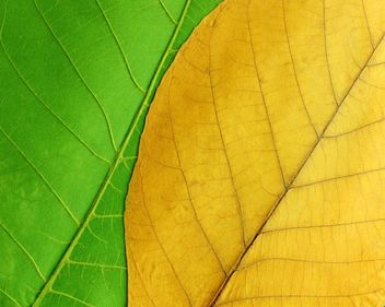 Green and yellow leaves - image gratuit #272611