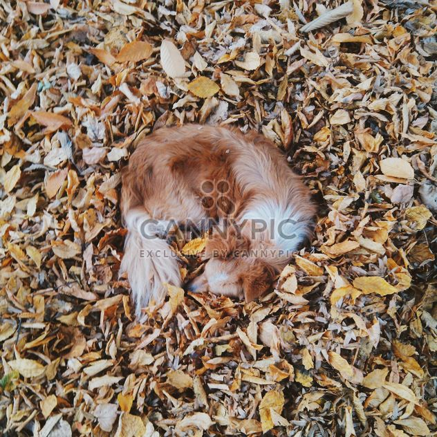 Dog sleeping in foliage - Free image #272971