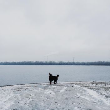 Sennenhund near winter river - бесплатный image #272981