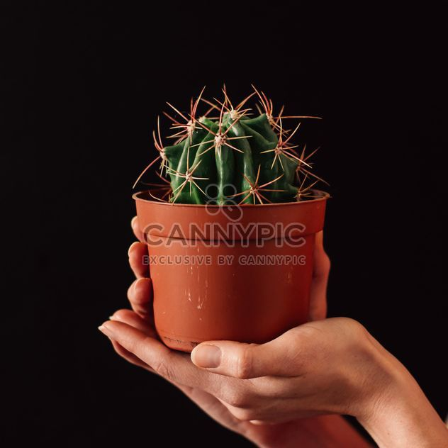 Pot with cactus in hands - Free image #273921