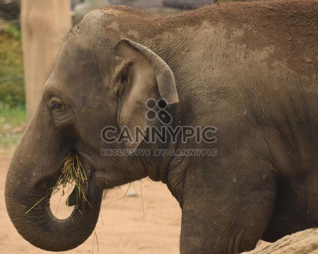 Elephant in the Zoo - Free image #274931