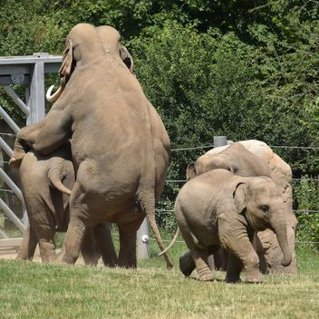 Elephants in the Zoo - Free image #274941