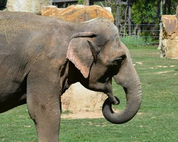 Elephant in the Zoo - image gratuit #274961