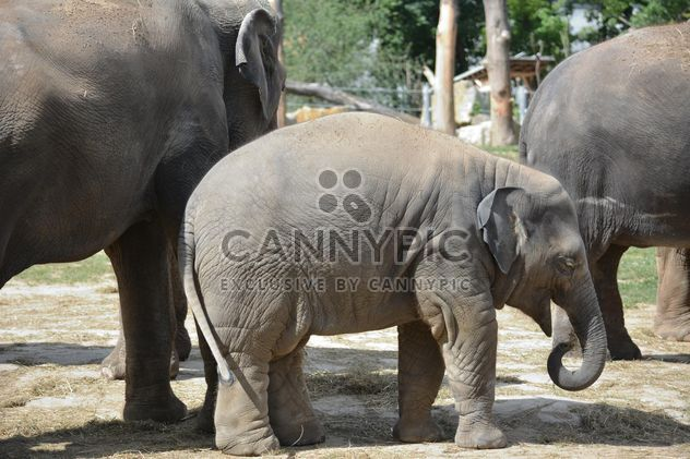 Elephants in the Zoo - Free image #274971
