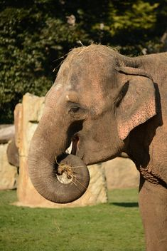 Elephant in the Zoo - Free image #275001
