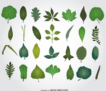 Green Leaves illustrations - бесплатный vector #275311