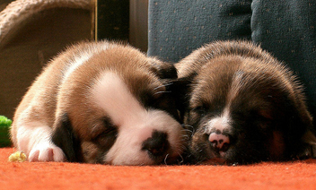 Sleeping Pups - image #275361 gratis