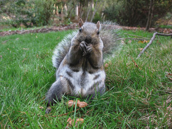 Favorite Squirrel - image gratuit #275421