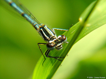 Extreme close-up Dragonfly - image #275461 gratis