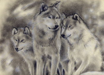 Wolf Family.SOLD - Kostenloses image #275761