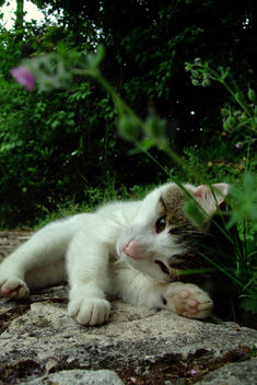 So sweet... - image #275781 gratis