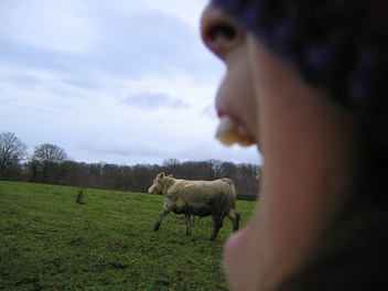 cow in mouth (who's crazy ?) - image #275971 gratis