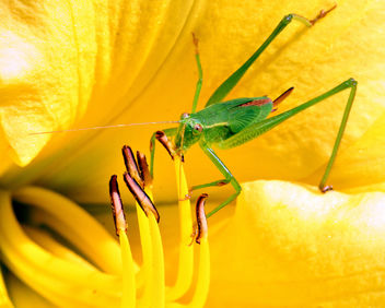 Green Bug - Free image #276471
