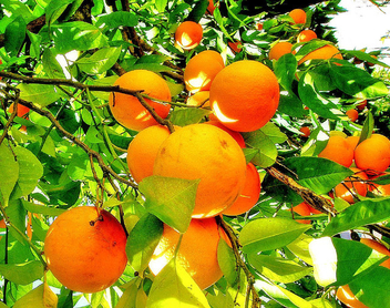 Orange - image #277141 gratis