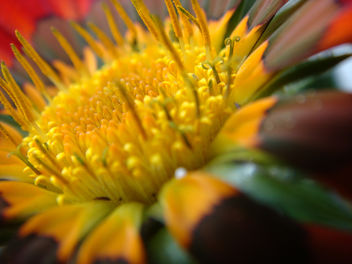 Yellow Central - image #277311 gratis