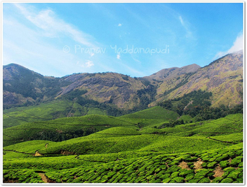 nature's beauty in munnar - Kostenloses image #279401