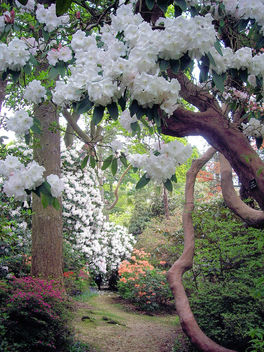 Through Top Walk, Leonardslee Gardens - image #279821 gratis