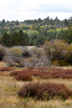 Fall colors in the Coconino National Forest - бесплатный image #280491