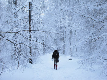 Plenitude Of A Winter Stroll - Free image #280781
