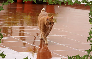 Mr Ricky on a Rainy Day - image gratuit #281681