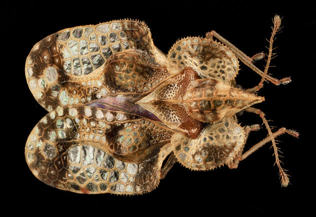 Lace Bug, Md, Pg County_2013-08-20-16.56.18 Zs Pmax - Free image #281961