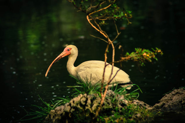 Bird In a Pond, Miami-Dade Zoo - image gratuit #281981