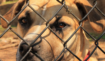 Innocent but jailed dog - Free image #282561