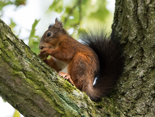 squirrel - Free image #283331