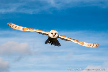 Owl in flight - image #283591 gratis