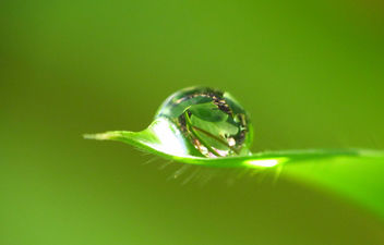 A drop of leaves on a leaf - Kostenloses image #285651