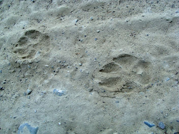 Tracking wolves with National Geographic - бесплатный image #286001
